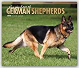 For the Love of German Shepherds 2018 14 x 12 Inch Monthly Deluxe Wall Calendar with Foil Stamped Cover, Animal Dog Breeds