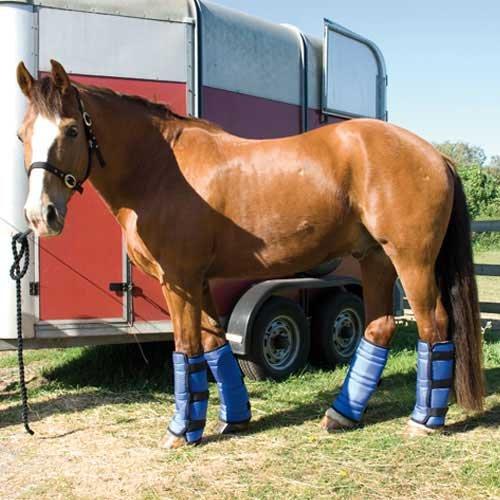 Rhinegold Transportgamaschen für Pferde Blau blau