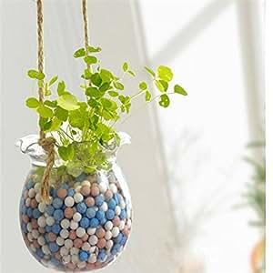 200pcs trébol de cuatro hojas de hierba Semillas Decoración cultivar su propia suerte interés semillas de flores Campo Home Garden