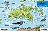 St. John USVI Dive Map Fish ID Virgin Islands Franko Maps Waterproof Fish Card