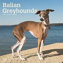 Italian Greyhounds 2019 Calendar