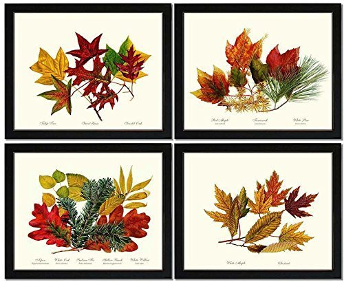 Tree Leaves(Autumn Foliage) Botanical Prints.Matched Set of 4 Vintage Wall Decor Reproductions. Artwork in 5x7 8x10 11x14 Sizes.