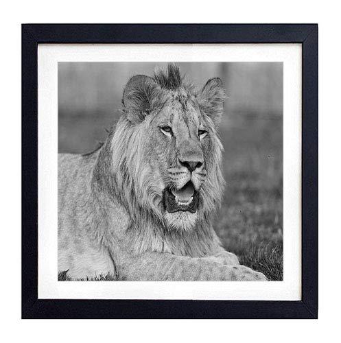 GLITZFAS PRINTS Framed Wall Art - Lion Teeth Grass Muzzle Lie - Art Print Black Wood Framed Wall Art Picture for Home Decoration - 18
