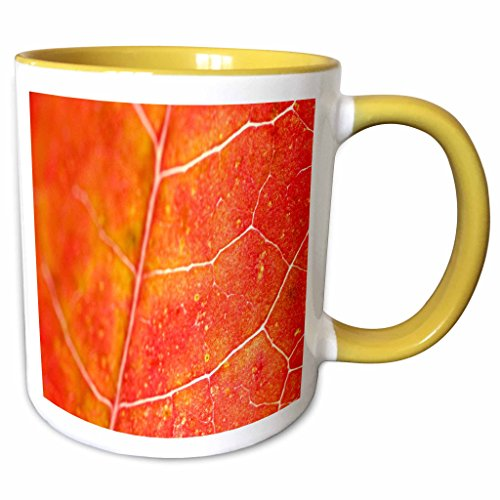 3dRose Yves Creations Colorful Leaves - Orange Leaf - 11oz Two-Tone Yellow Mug (mug_36747_8)