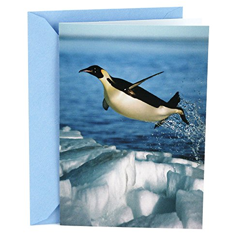 Hallmark Shoebox Funny Congratulations Greeting Card (Penguin) (Shoe Box Note)