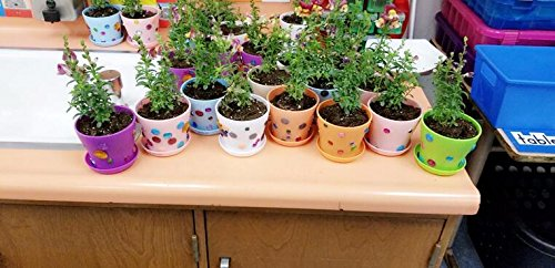 KINGLAKE 8 Pcs 4'' Plastic Plant Flower Seedlings Nursery Pot/Pots Planter Colorful Flower Plant Container Seed Starting Pots with Pallet,8 Colors by KINGLAKE (Image #5)