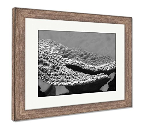 Ashley Framed Prints Montipora Coral Montipora Is A Genus Of Small Polyp Stony Coral In The Phylum, Wall Art Home Decoration, Black/White, 34x40 (frame size), Rustic Barn Wood Frame, (Montipora Coral)