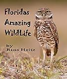 Florida's Amazing Wildlife