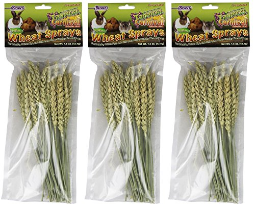 51 Q%2BPGJCqL - F.M. Brown's Tropical Carnival Wheat Sprays Pet Treat, 1.5-Ounce (Pack of 3)