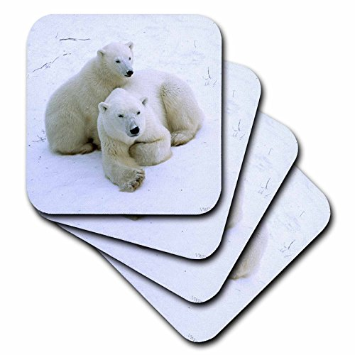 3dRose cst_45685_1 Polar Bear Mother and Cub 'Ursus Maritimus' Churchill, Canada-Soft Coasters, Set of - Personalization Canada