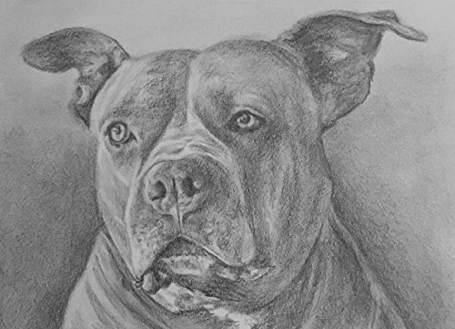 Pet Pencil Portraits (One Animal) by by ashley LLC