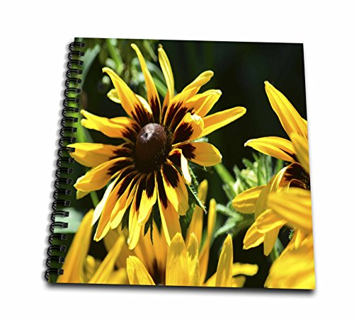 3dRose Beverly Turner Flora Photography - Blacked Eyed Susan Flowers - Drawing Book 8 x 8 inch - Free For Blacked