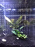 toyuto 9.8'' x 11'' 10 Gallon Fry Fish Tank Acrylic Divider Aquarium Isolation Board