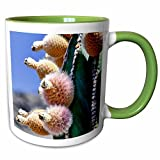 3dRose Danita Delimont - Cacti - Pachycereus pringlei, Cardon cactus, Baja, Mexico - SA13 MWI0045 - Mark Williford - 11oz Two-Tone Green Mug (mug_141612_7)