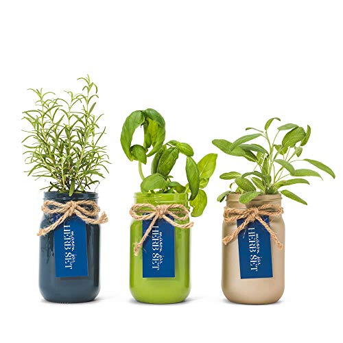 Thoughtfully Mason Jar Herb Garden | Contains Rosemary, Basil and Sage Seeds with Soil Pods to Grow Your Own Herbs