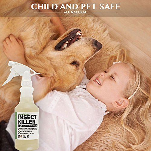 All Natural Non toxic Insect Killer Spray by Killer Green - 16 oz. - Kills on cockroaches, Ants, Mosquitos, Spiders. !00% Money Back Guarantee - Safe for People, Plants and Pets by Killer Green (Image #4)