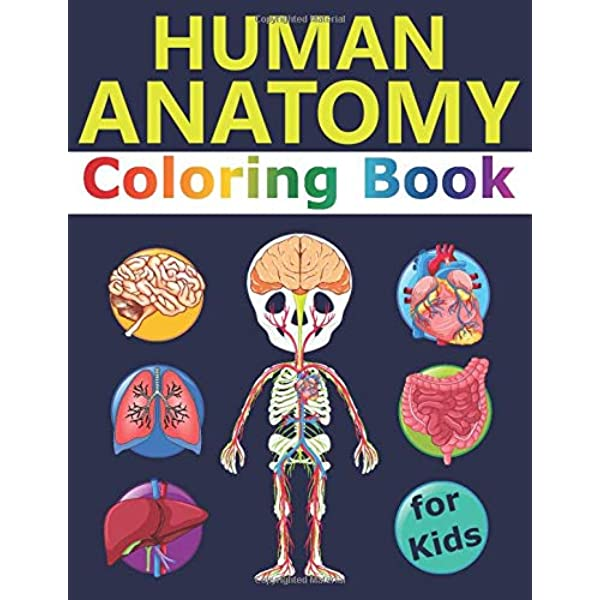 Amazon.com: Human Anatomy Coloring Book For Kids: Over 30 Human Body Coloring  Sheets, Great Gift For Boys & Girls, Ages 4, 5, 6, 7, And 8 Years Old  (Alek's Coloring Books) (9798621755591): Malkovich, Alek: Books