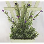 Rosemary-with-White-Fence-Pot