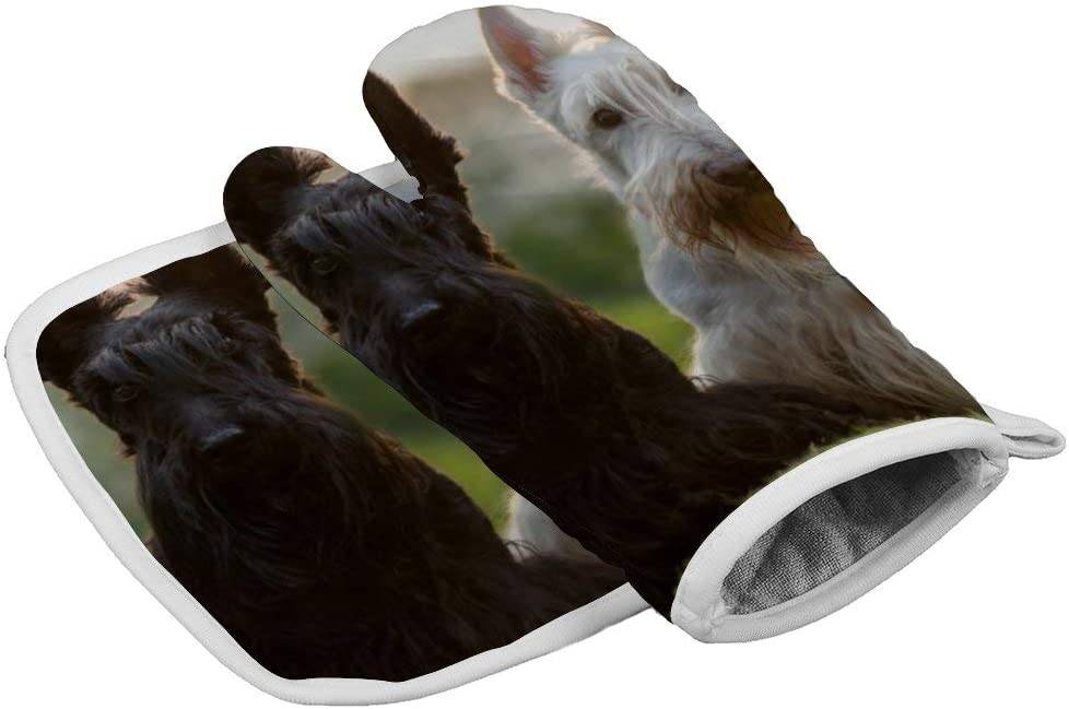 OWZI Soft Oven Glove combinationfor Barbecue, Baking (Insulation Gloves + Insulation Square pad),Scottish Terrier Sitting on The Grass