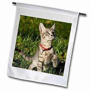 Danita Delimont - Cats - Grey tabby kitten, Cat, Florida - US10 MPR0238 - Maresa Pryor - 18 x 27 inch Garden Flag (fl_89215_2)