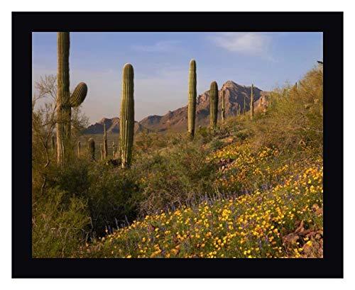 Saguaro Cacti and California Poppy Field at Picacho Peak State Park, Arizona by Tim Fitzharris - 16