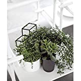 Seway Garden Metal Trellis, Lattice-Shaped Plant