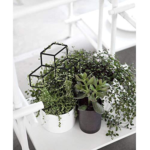 Enrejado de metal Seway Garden, enrejado de plantas en forma de ...