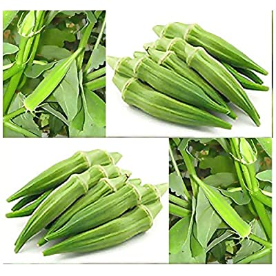 """Risalana 30 x FIFE Creek COWHORN Okra Seed - Heirloom - Out Yield Most Other Varieties - 12"""" Long - 75 Days : Garden & Outdoor"""