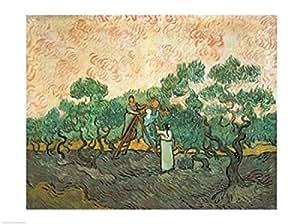 Vincent Van Gogh – Los recolectores de aceitunas Artistica di Stampa (60,96 x 45,72 cm)