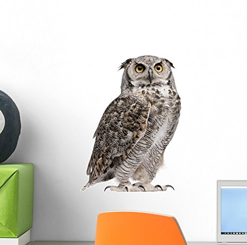 Cheap  Wallmonkeys Great Horned Owl Bubo Wall Decal Peel and Stick Animal Graphics..