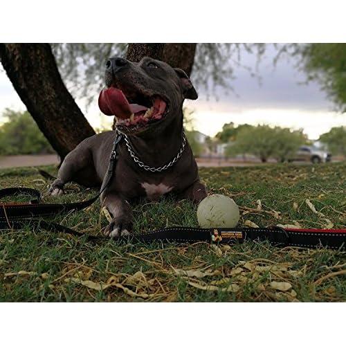 3b605bbf28bd2 Pawfessor Dion's 6ft Reflective Double Handle Traffic Dog Leash ...