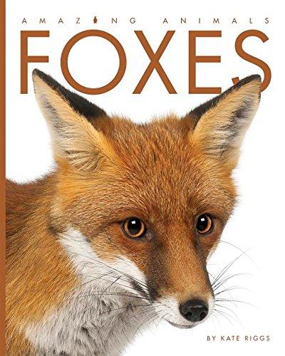 Foxes (Amazing Animals)