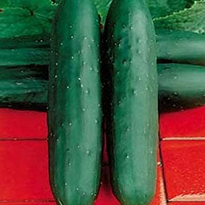 David's Garden Seeds Cucumber Slicing Dasher II SLI8011(Green) 50 Hybrid Seeds
