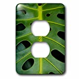 3dRose lsp_209341_6 Monstera Deliciosa, Iao in Hawaii, USA 2 Plug Outlet Cover