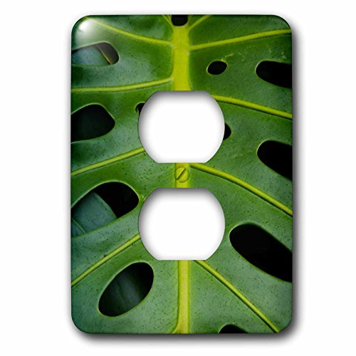 3dRose lsp_209341_6 Monstera Deliciosa, Iao in Hawaii, USA 2 Plug Outlet Cover by 3dRose