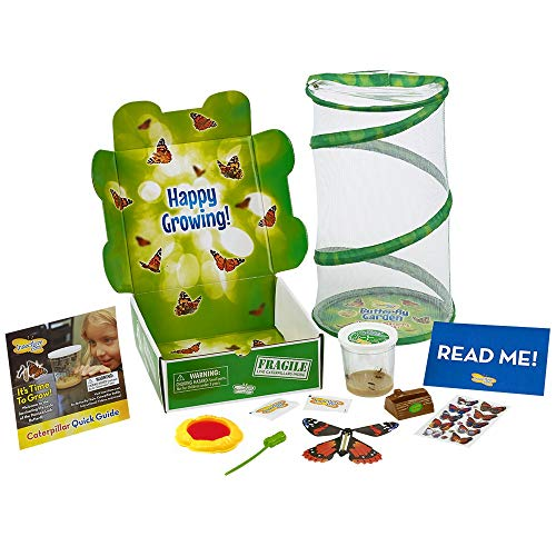(Insect Lore Deluxe Butterfly Garden Gift Set with Live Cup of Caterpillars)