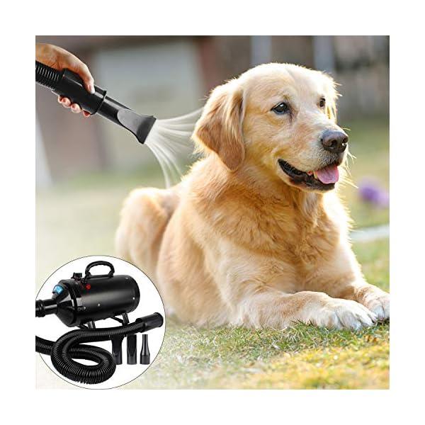Secadores profissionais para cães