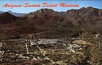 Amazon Com Arizona Sonora Desert Museum Tucson Original