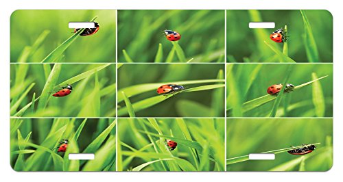 Ladybug License Plate by Ambesonne, Ladybug over Fresh Grass Collection Divided Collage Vibrant Life Lawn Foliage Theme, High Gloss Aluminum Novelty Plate, 5.88 L X 11.88 W Inches, Green ()