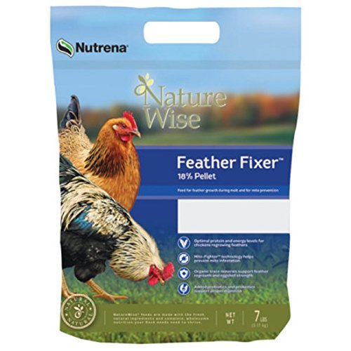 The Best Naturewise Chicken Food