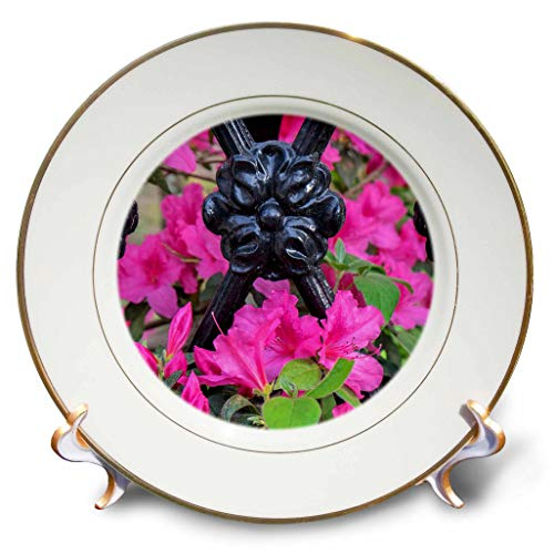 3dRose Danita Delimont - Flowers - Pink Azalea, Wrought Iron Fence, Charleston, South Carolina, USA - 8 inch Porcelain Plate (cp_315014_1)