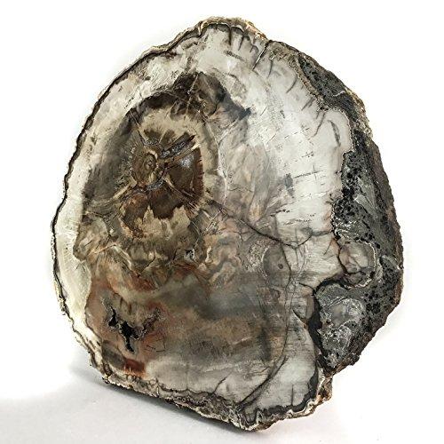 (Astro Gallery Of Gems Madagascar Petrified Wood Slice )