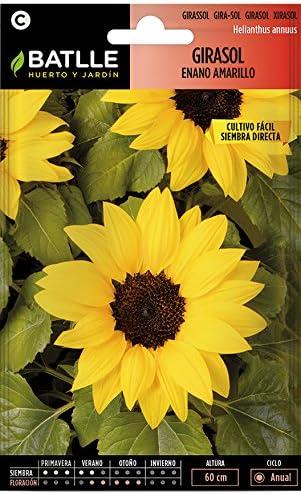 Semillas de Flores - Girasol enano amarillo - Batlle: Amazon.es ...