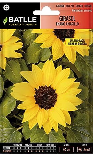 Semillas de Flores - Girasol enano amarillo - Batlle: Amazon.es: Jardín