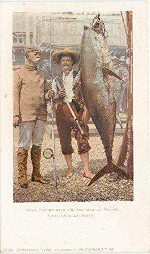 Historic Pictoric Postcard Print   Tuna caught with rod and reel, Avalon, Santa Catalina, Calif, 1900   Vintage Fine Art