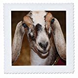 3dRose Nubian Dairy Goat Doe White Stripe Caprine Sq - Quilt Square, 6 by 6-Inch (qs_156065_2)