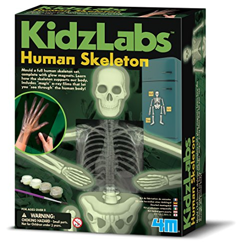 (4M Glow Human Skeleton Science Kit)