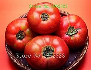 Calientes! 100 piezas de 16 colores de tomates Semillas de Nueva flores del jardín de cuatro estaciones de siembra mundo semillas de flores raras para el jardín