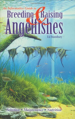 Breeding & Raising Angelfishes