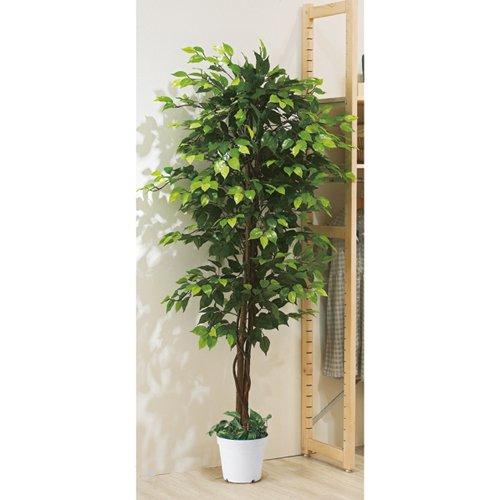 立ち木 人工樹木 ベンジャミン グリーン H210cm オリジナル B013BEFRVI